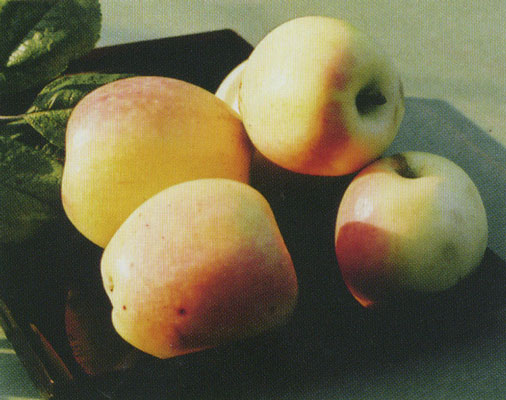 рижский голубок яблоня описание фото