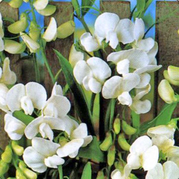 Семена цветов овощей лекарственных трав кормовых почтой