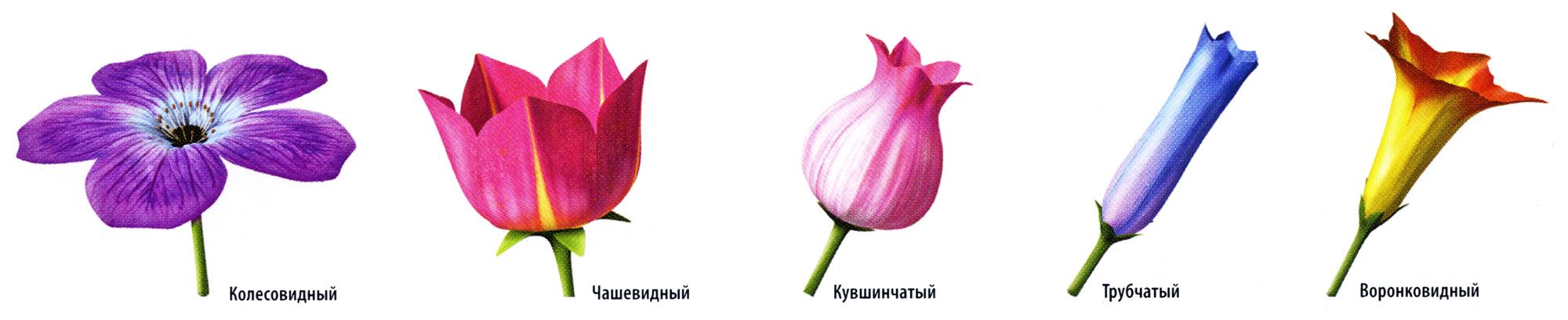 цветков