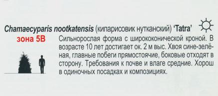 Кипарисовик нутканский